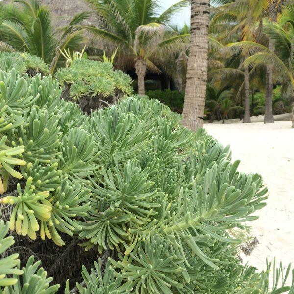 Playa del Carmen - Plage