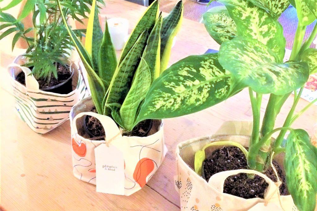 Plantes et moi