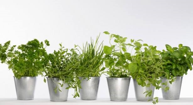 Photo LGDP Plantes aromatiques