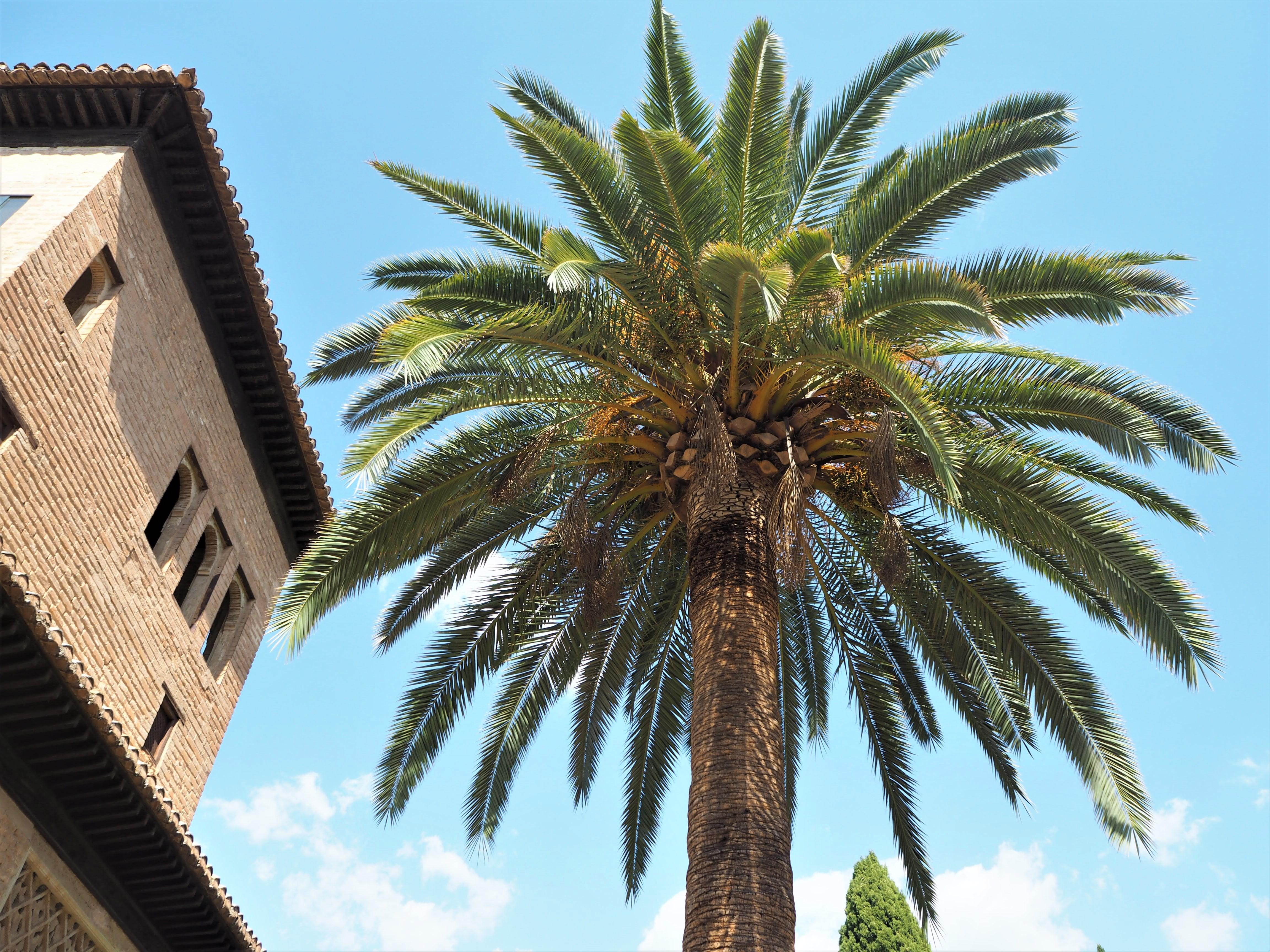 alhambra grenade jardins
