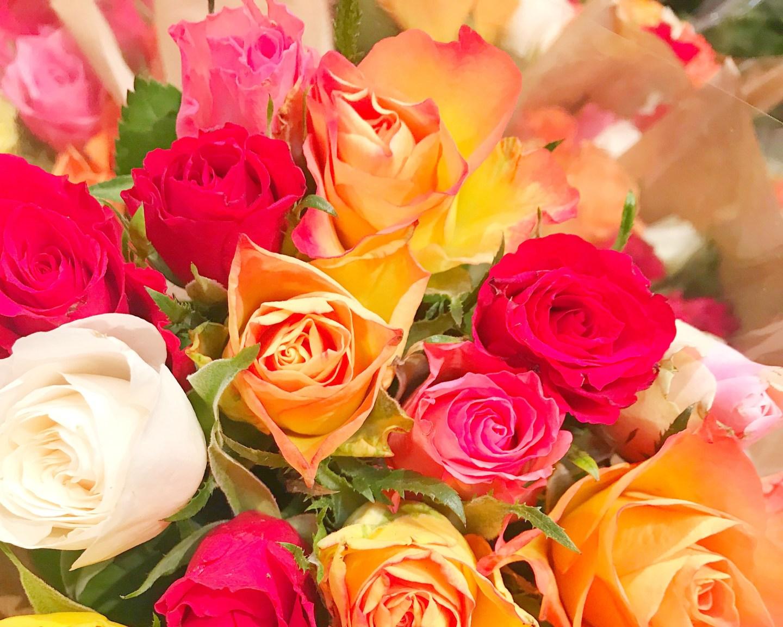 bons plans fleurs lidl