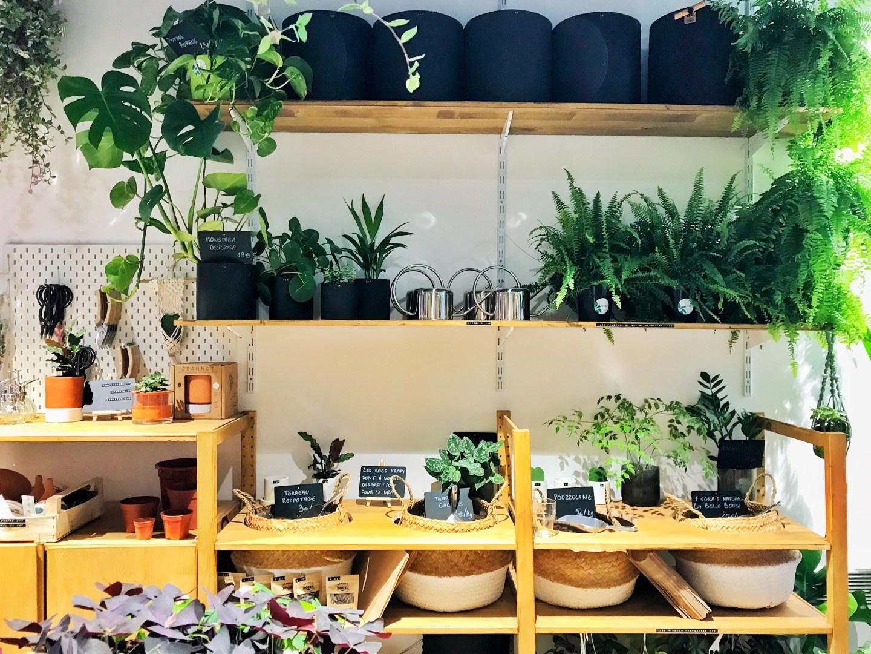 bonne adresse jardinerie eukalypte