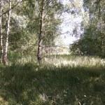 Ökopunkte in Nordfriesland