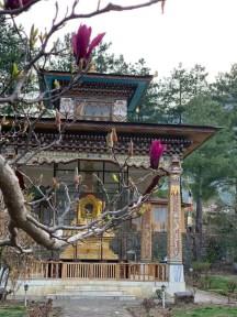 DKR-10Bhutan DKR gold stupa with blossom 56393193_10215818335785576_5838404875179786240_n