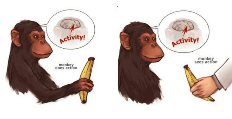 Image of monkey see monkey do study copywriting