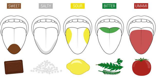 Receptores en la lengua de los distintos sabores. 5 hasta la fecha, Dulce, salado, agrio, amargo y umami.