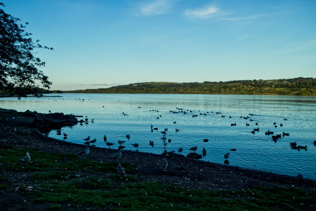 Birds on the water at Castle Semple Country Park