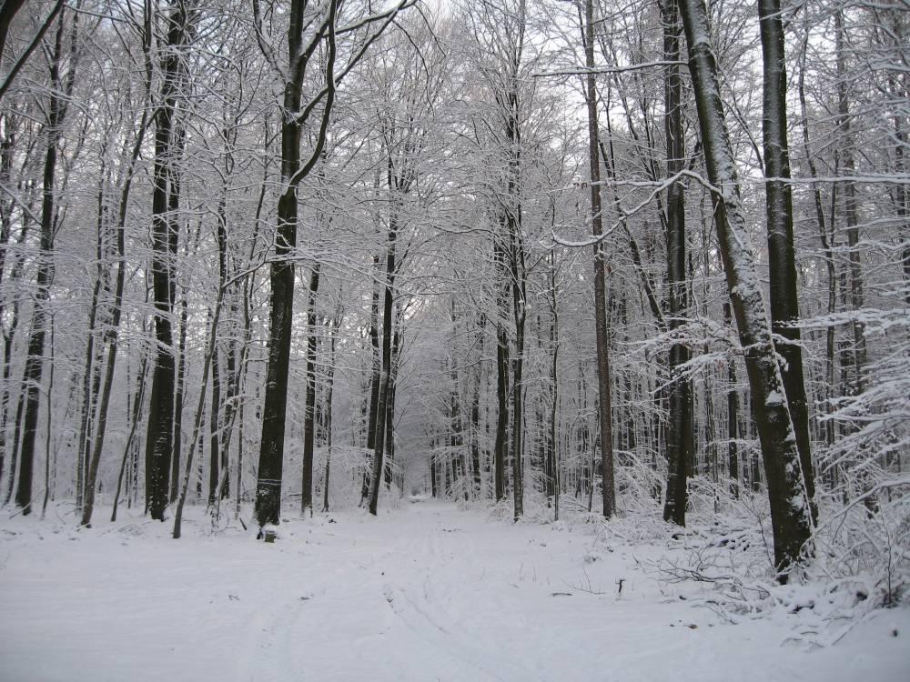 Winter Wonderland (4/6)
