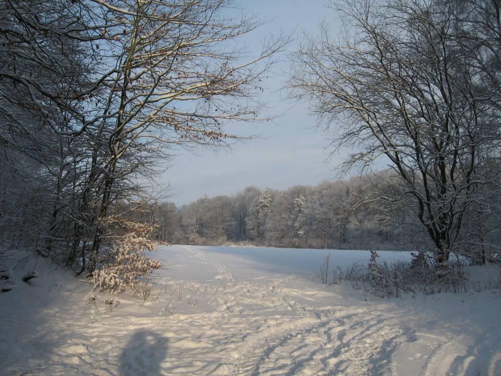 Winter Wonderland (6/6)