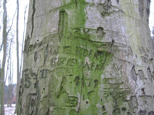 Tree with inscription
