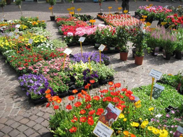 Bremen flower market