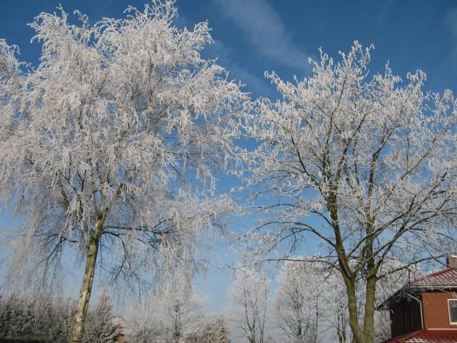 Hoarfrost tree