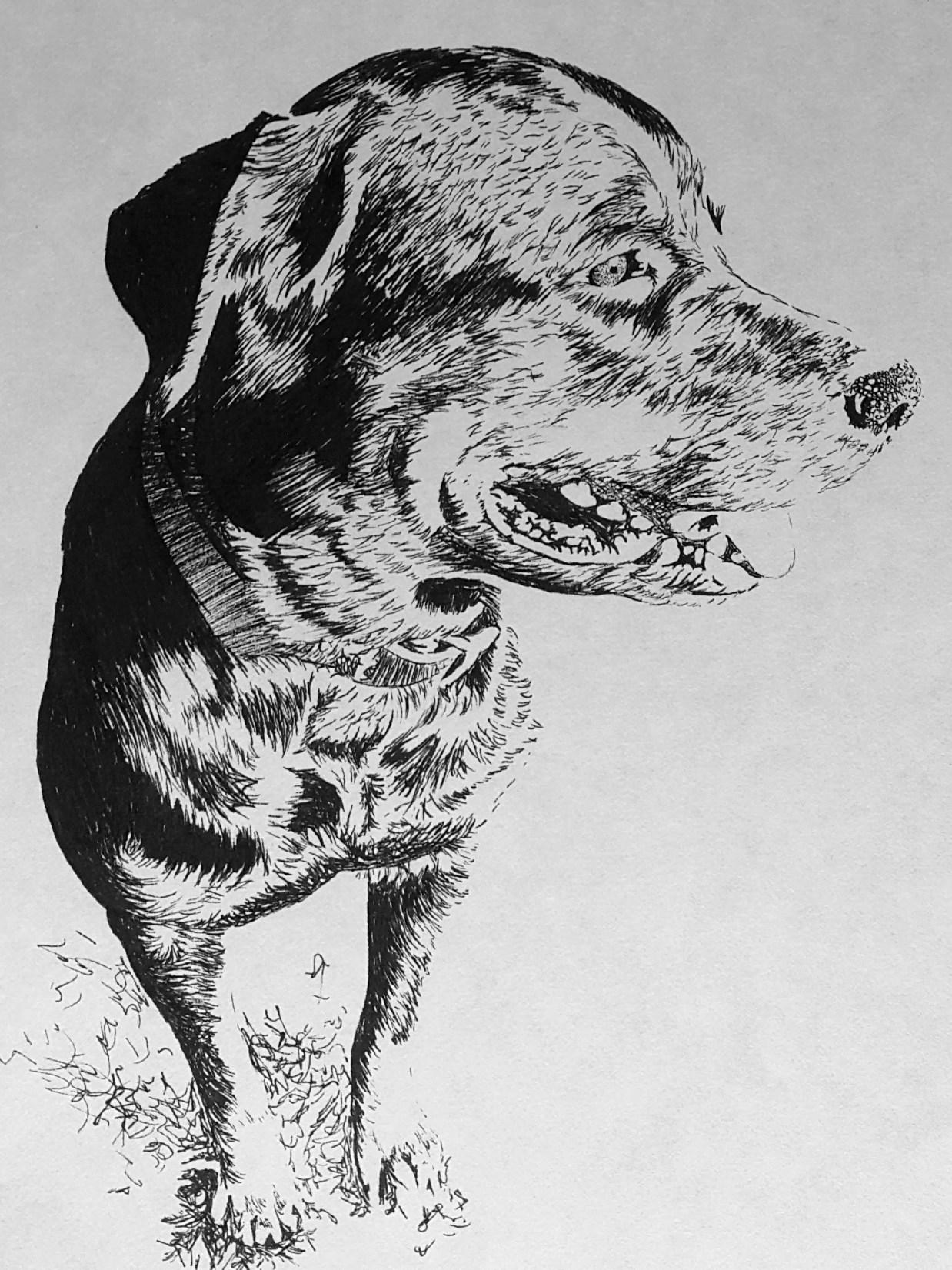 """Stella"" Sketch"