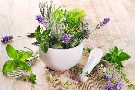 Лекарственные травы для ополаскивания