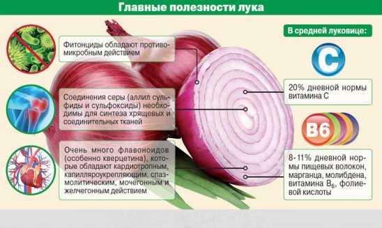 лук польза и вред для здоровья