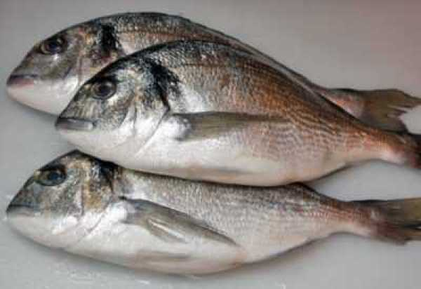 Рыба Дорадо 2