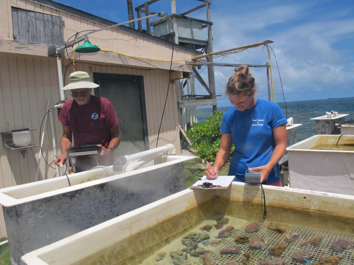 facilities  u2013 coral reef ecology lab