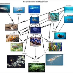 Coral Reef Food Chain Diagram 1993 Jeep Grand Cherokee Wiring The Amazing - Reefs