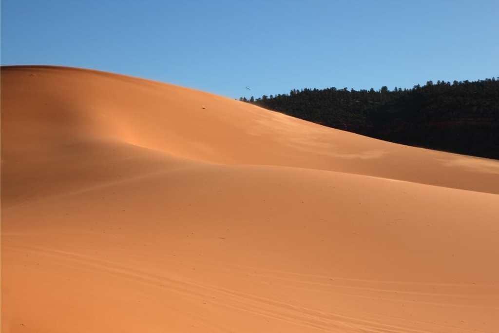 Sand Hollow Dunes