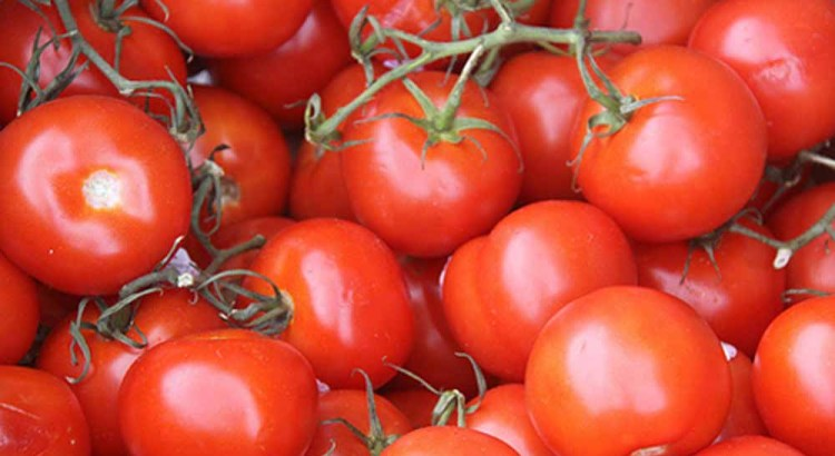 """Fresh Food and Local Produce Coming to Coral Springs via the """"Green Market"""""""