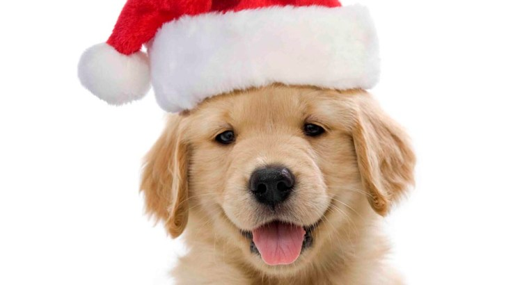 Santa Sets Up Shop for Claus and Paws Pet Photos at the Mall