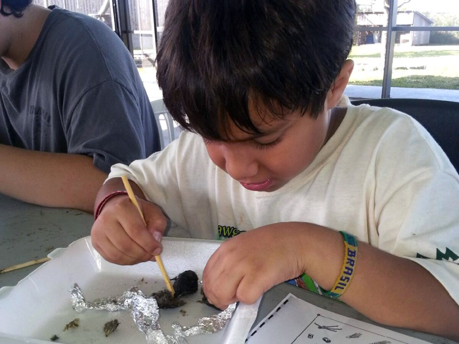 Dissecting an owl pellet at Sawgrass Nature Center