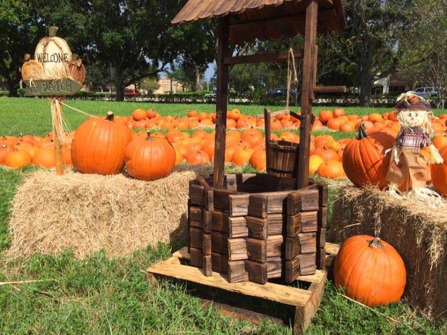 The Parkridge Pumpkin Patch