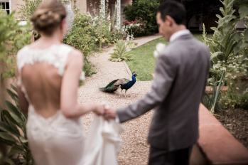 Bride and Groom Greeted by a Peacock after the Ceremony