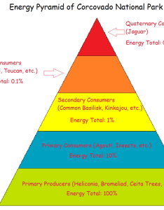 This energy pyramid of the ecosystem in our park shows how passes from one trophic level organisms to next it is assumed that there are also food web and corcovado national rh corcovadotravel weebly