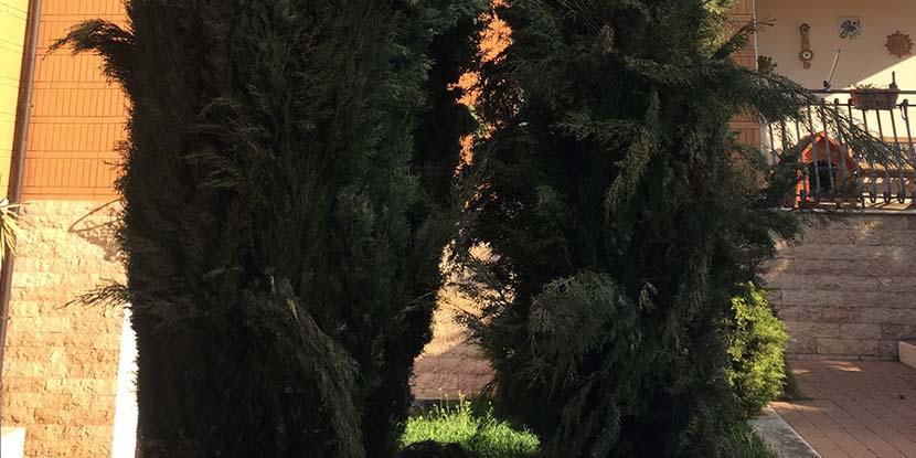 Giardinaggio  Cordeschi Costantino