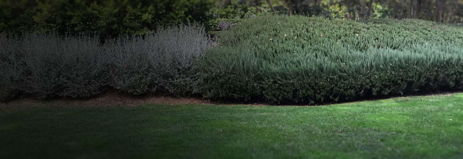 Imprese Giardinaggio Laquila