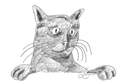 Tots els gats tenen tres noms…