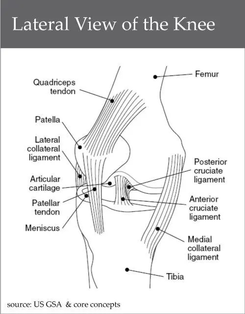 Lateral-View-of-the-Knee