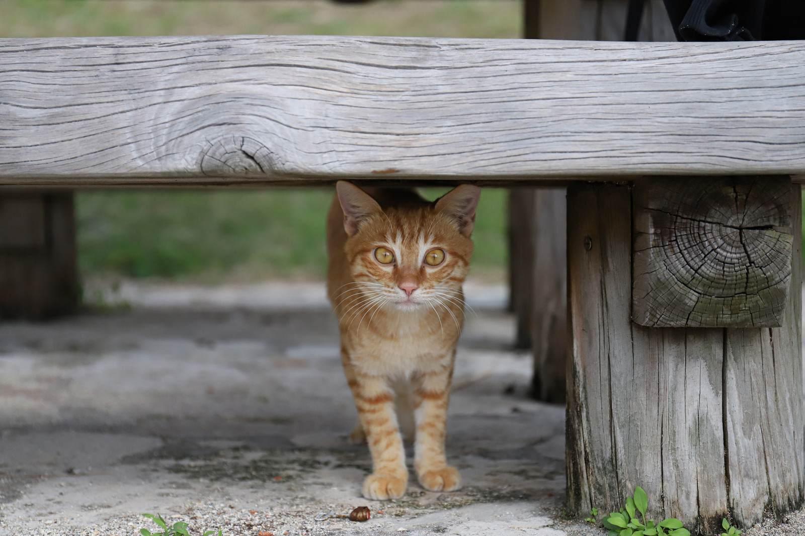心霊ちょっといい話『邪魔をする猫』など短編全10話