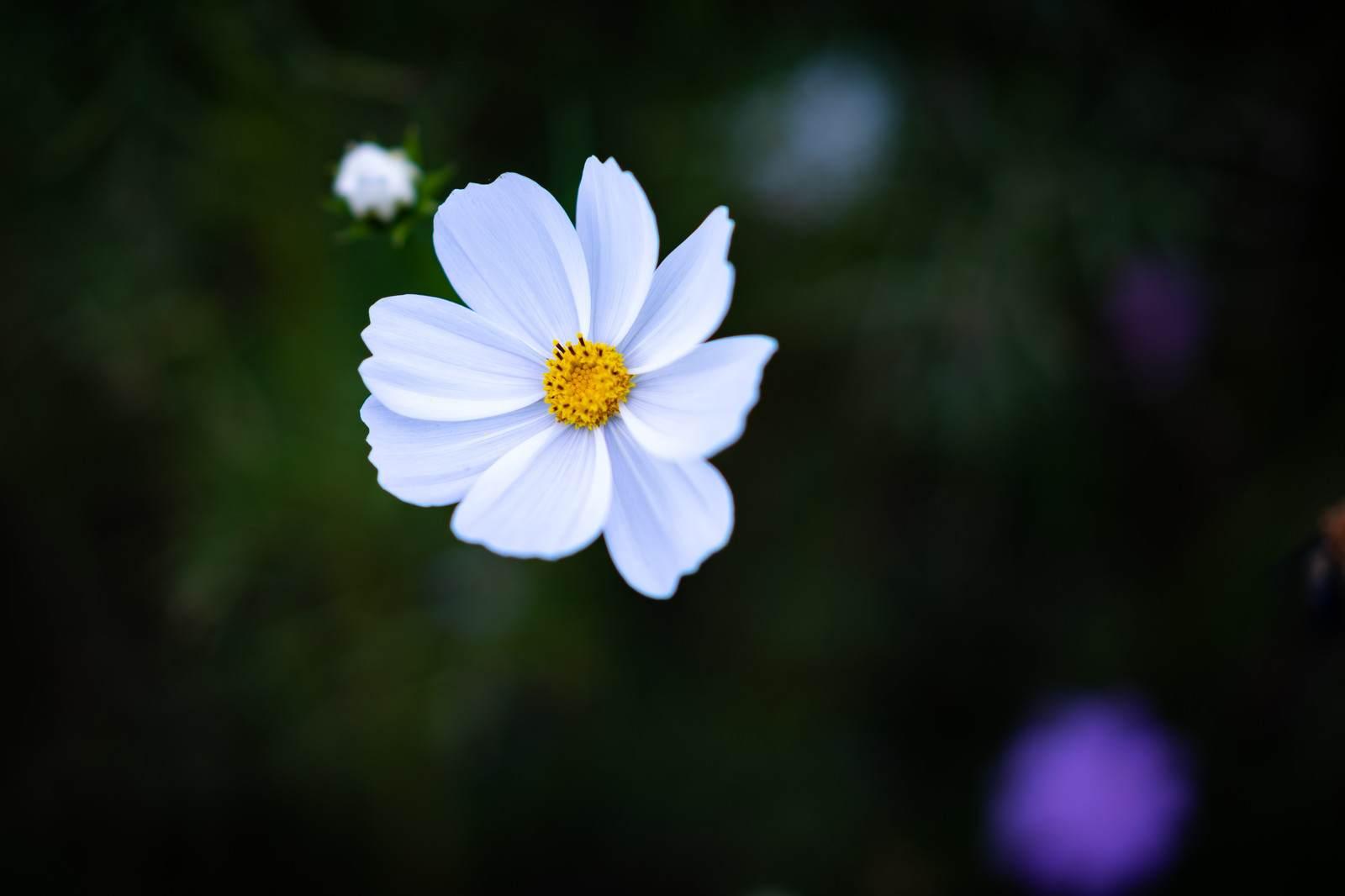 心霊ちょっといい話『一本だけの花』など短編全10話