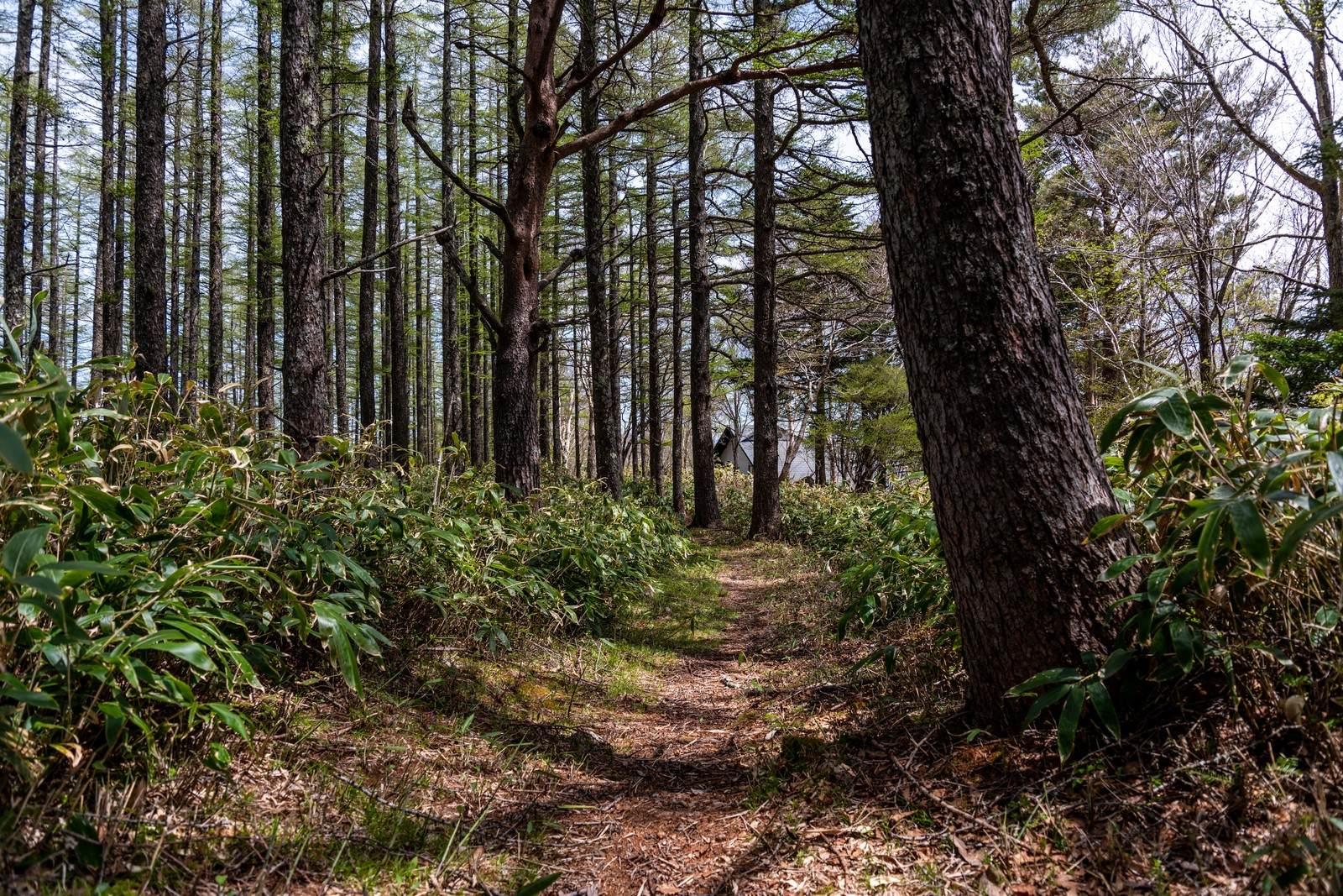 山にまつわる怖い話『奈良県の山での出来事』|洒落怖・山の怪談
