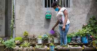 Watering plants in Ethioipa: how young lives have been affected by COVID-19. © Young Lives / Mulugeta Gebrekidan