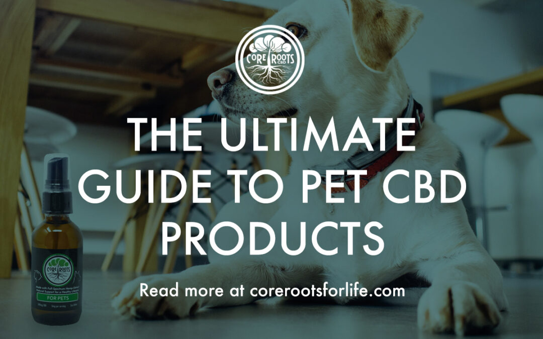 The Ultimate Guide to Pet CBD Products