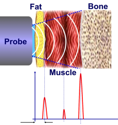body fat percentage can be determined the graph  [ 1055 x 1030 Pixel ]
