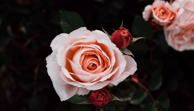 core values; flowers; flourishing