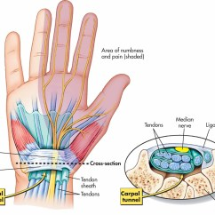 Ulnar Nerve Diagram What Is Dma Controller With Block The Wrist And Carpal Tunnel Corewalking