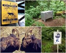 Cougars, Bear Bin, Tsunami, mud
