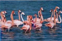 Flamingos in Lefkimmi