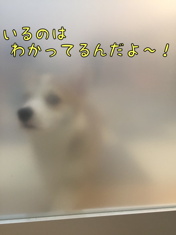 2016-03-02 07.04.50