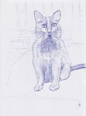 May16_cat sketch #2