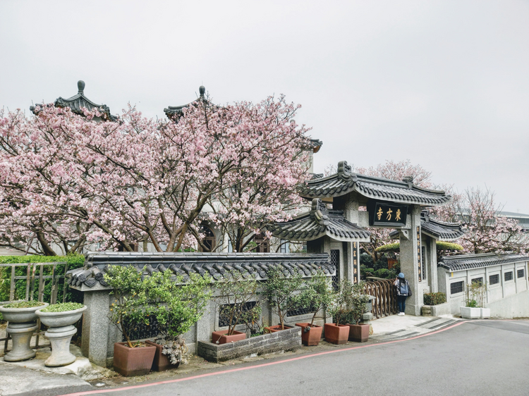 Cherry Blossoms at Dongfang Temple