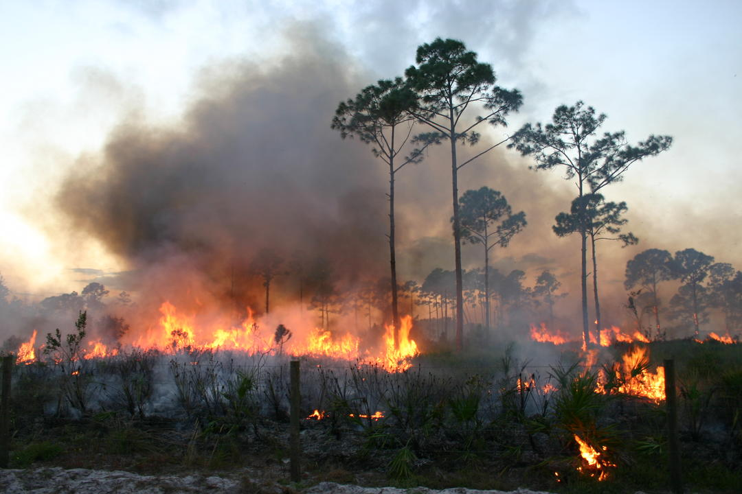 Prescribed Fire  Audubon Corkscrew Swamp Sanctuary