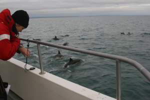 Cork Whale Watch Cetacean Research