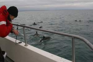 Cork Whale Watch Cetacean Research