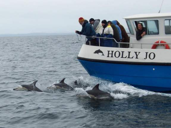 Whale Watching, West Cork, Common Dolphins